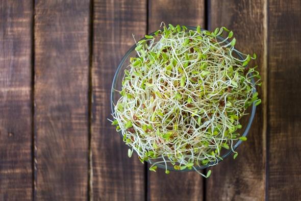 Alfalfa Sprouts ในชาม