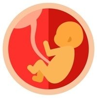 ไอคอนทารกในครรภ์
