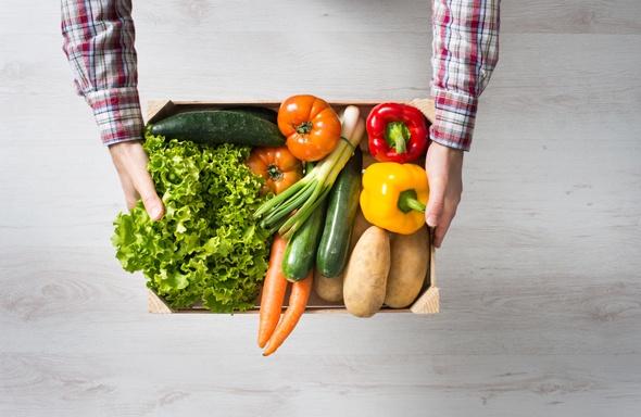 มือถือกล่องผัก