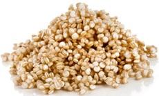 กอง Quinoa