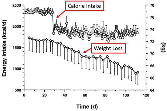 โปรตีนแคลอรี่และการลดน้ำหนัก